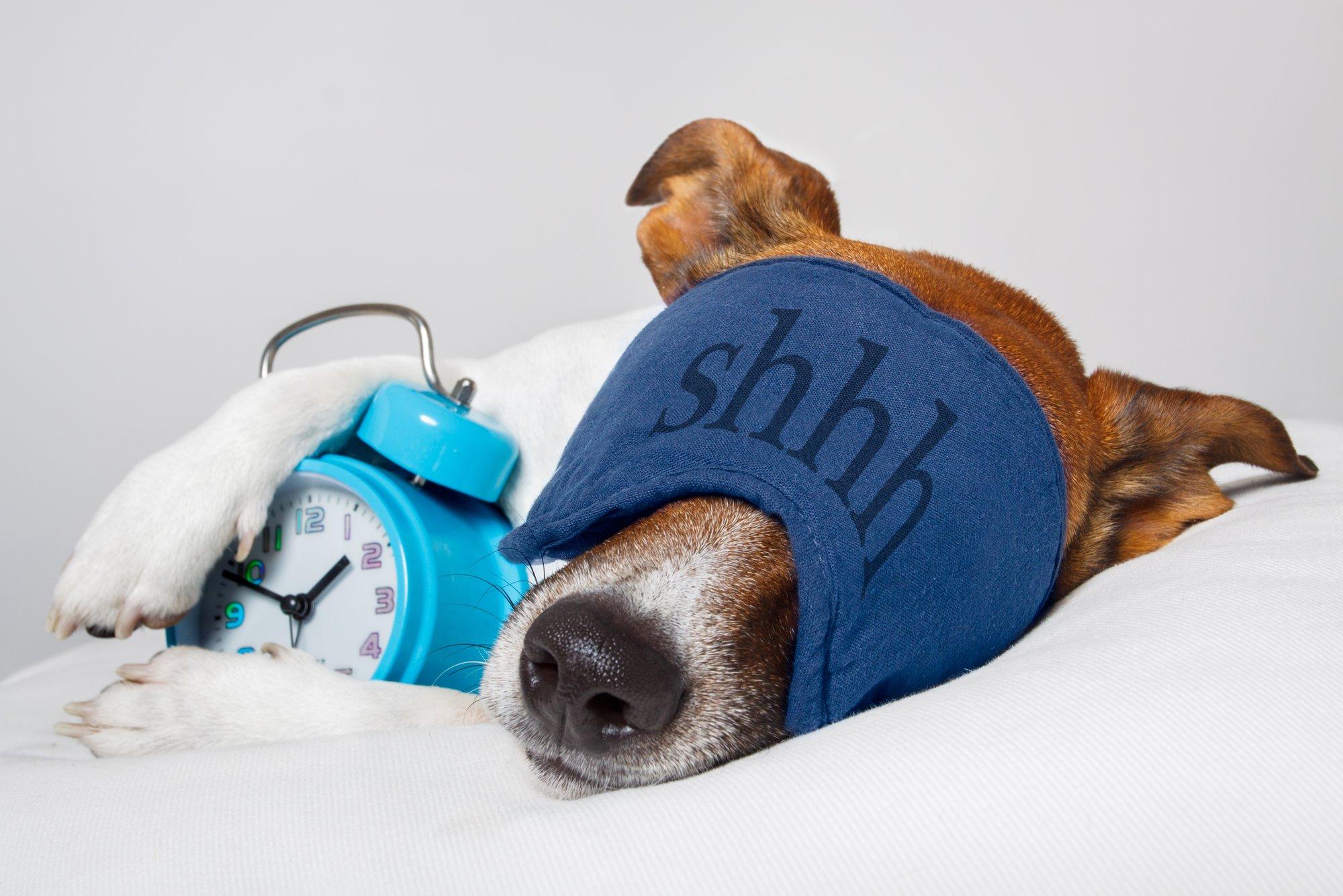 Dog sleeping with alarm clock and sleeping mask-1