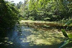 Trap Pond State