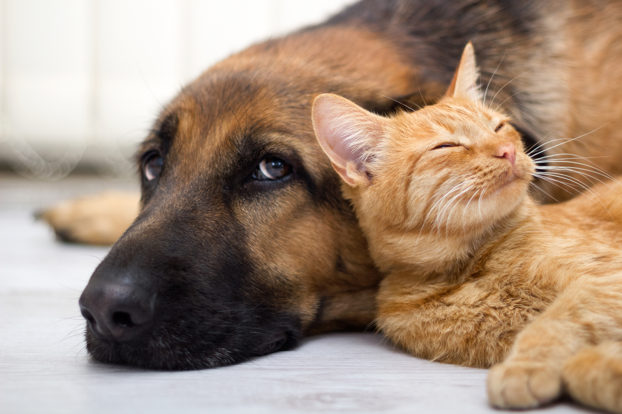 Unexpected Pets Call for Wilmington Property Management Tips Image